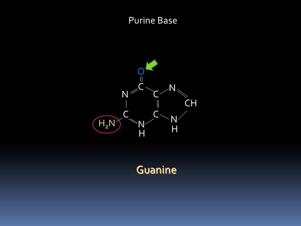 C HN C N C C N N CH H H O O Purine Base Xanthine