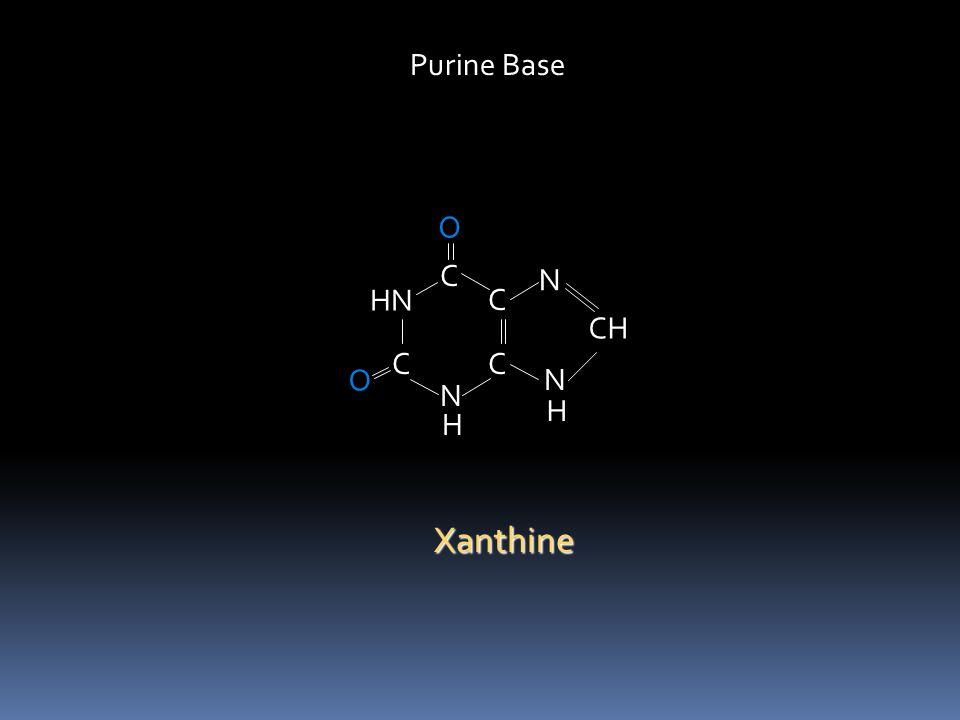 C HN C N C C N N CH O H O H C HN HC N C C N N CH H O XanthineHypoxanthine C HN C N C C N N C = O O H O H Uric Acid 2,6,8-trioxypurine H Purine bases