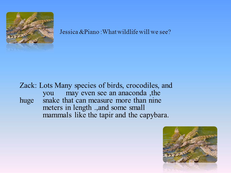 Jessica &Piano :What wildlife will we see? Zack: Lots Many species of birds, crocodiles, and you may even see an anaconda,the huge snake that can meas