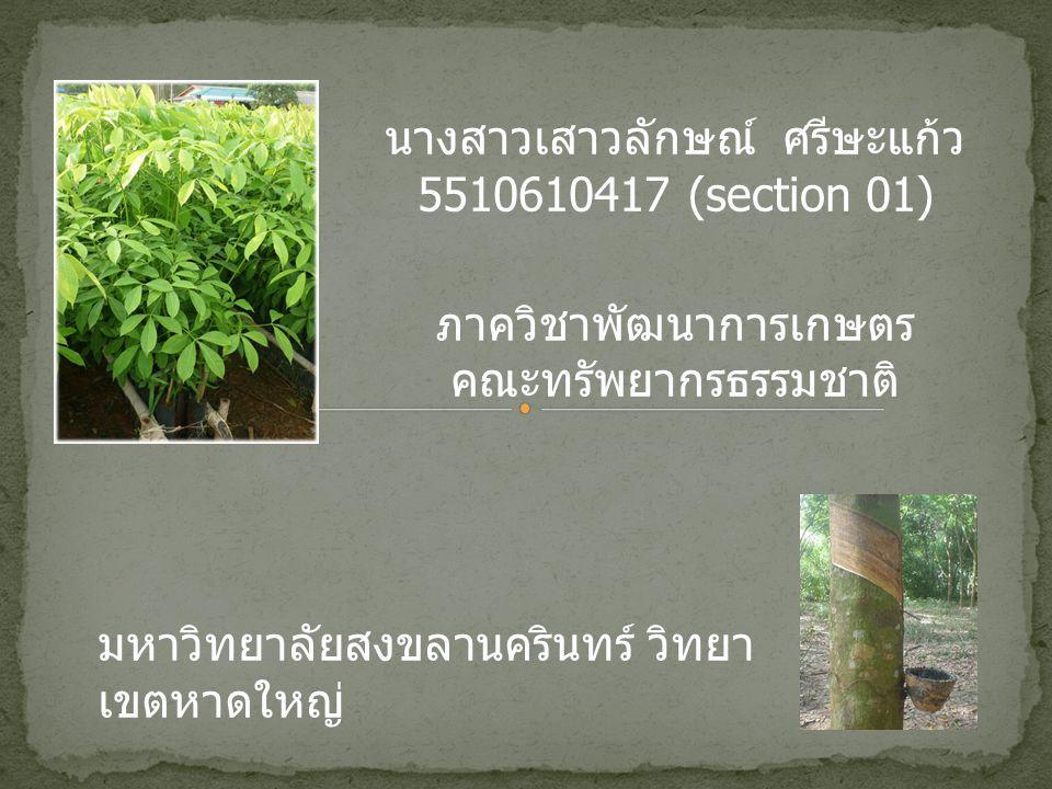 นางสาวเสาวลักษณ์ ศรีษะแก้ว 5510610417 (section 01) ภาควิชาพัฒนาการเกษตร คณะทรัพยากรธรรมชาติ มหาวิทยาลัยสงขลานครินทร์ วิทยา เขตหาดใหญ่