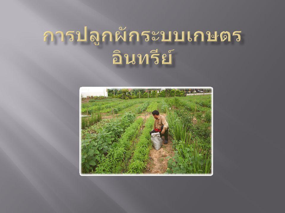 การไถพรวนและเตรียมแปลง ต้องทำการไถพรวนให้ พื้นที่ในแปลงโล่งแจ้ง ปลูกพืชสมุนไพรไล่แมลง ให้ปลูกก่อนที่จะปลูกพืช หลักคือพืชผักต่างๆ ( เสริมกับการป้องกัน ) การแยกแปลงปลูกยกแปลงเพื่อปลูกพืชผัก ก่อนที่จะ ปลูกจะต้องมีการปรับสภาพดินในแปลงปลูก ปลูกพืชสมุนไพรกันแมลง ให้ปลูกที่ขอบแปลงก่อน เพื่อป้องกันแมลงก่อนที่จะทำการปลูกพืชผัก พอครบ กำหนด 7 วัน การเตรียมน้ำสมุนไพรไล่แมลง ก่อนรดน้ำทุกวันควร ขยำขยี้ใบ ตะไคร้หอมแล้วใช้ไม้เล็กๆ ตีใบกระเพรา โหระพา ข่า ฯลฯ เพื่อให้เกิดกลิ่นจากพืชสมุนไพรออก ไล่แมลง