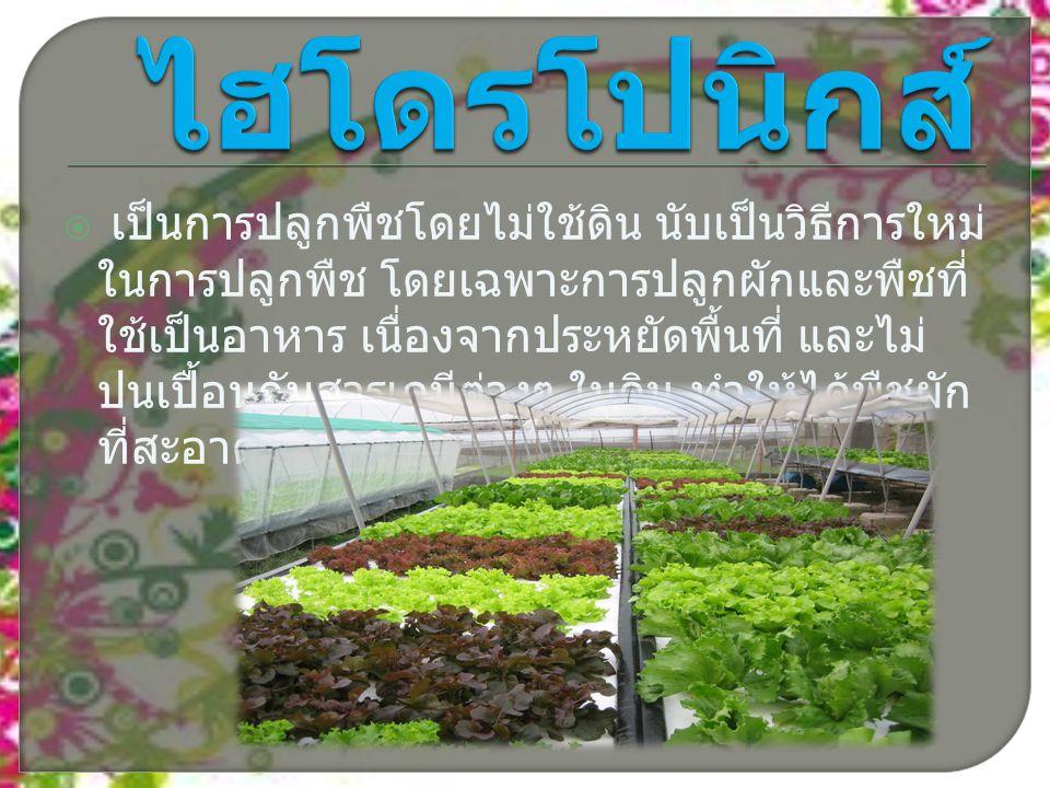  เป็นการปลูกพืชโดยไม่ใช้ดิน นับเป็นวิธีการใหม่ ในการปลูกพืช โดยเฉพาะการปลูกผักและพืชที่ ใช้เป็นอาหาร เนื่องจากประหยัดพื้นที่ และไม่ ปนเปื้อนกับสารเคมีต่างๆ ในดิน ทำให้ได้พืชผัก ที่สะอาดเป็นอาหาร