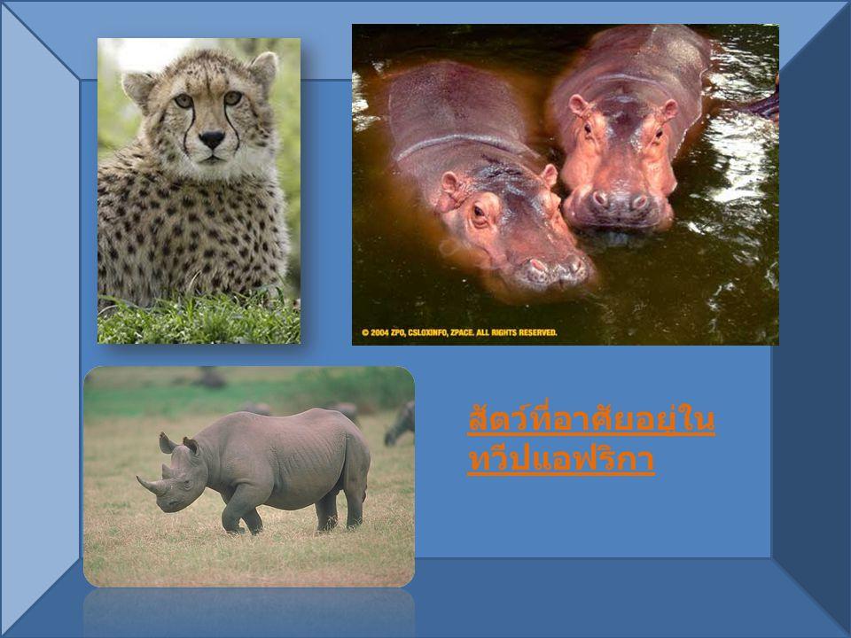 สัตว์ที่อาศัยอยู่ใน ทวีปแอฟริกา