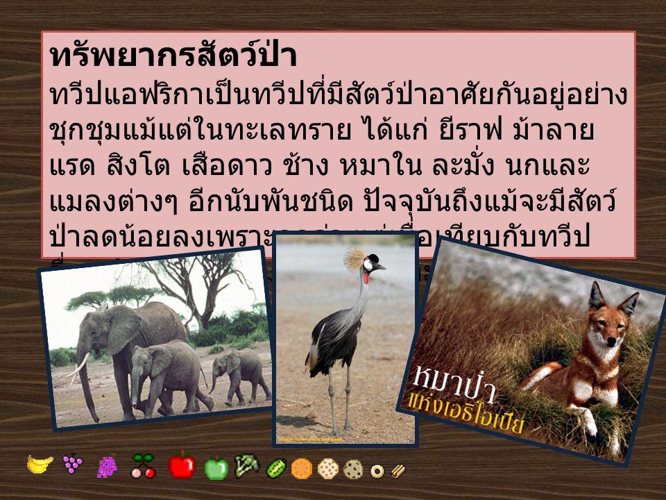 ทรัพยากรสัตว์ป่า ทวีปแอฟริกาเป็นทวีปที่มีสัตว์ป่าอาศัยกันอยู่อย่าง ชุกชุมแม้แต่ในทะเลทราย ได้แก่ ยีราฟ ม้าลาย แรด สิงโต เสือดาว ช้าง หมาใน ละมั่ง นกแล