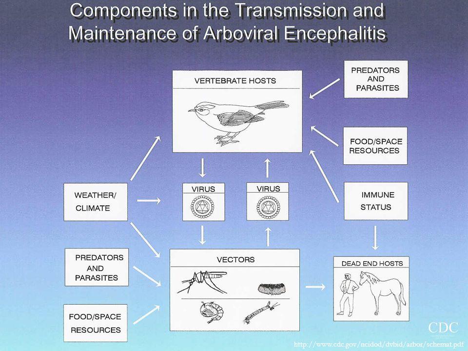 http://www.cdc.gov/ncidod/dvbid/arbor/schemat.pdf