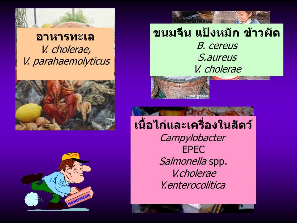 อาหารทะเล V. cholerae, V. parahaemolyticus เนื้อไก่และเครื่องในสัตว์ Campylobacter EPEC Salmonella spp. V.cholerae Y.enterocolitica ขนมจีน แป้งหมัก ข้