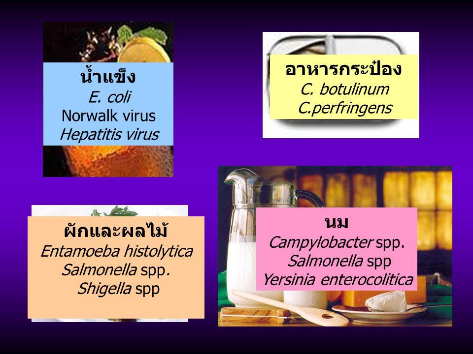 อาหารกระป๋อง C. botulinum C.perfringens นม Campylobacter spp. Salmonella spp Yersinia enterocolitica น้ำแข็ง E. coli Norwalk virus Hepatitis virus ผัก