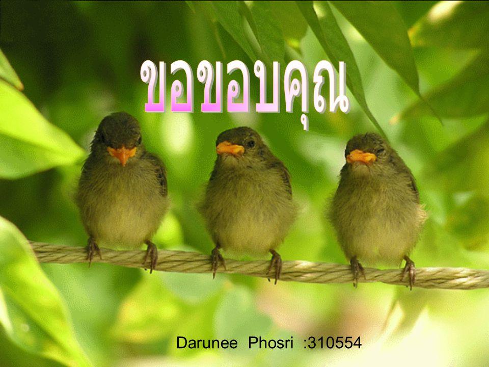 Darunee Phosri :310554