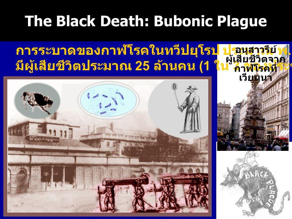 The Black Death: Bubonic Plague การระบาดของกาฬโรคในทวีปยุโรป ประมาณ พ. ศ. 1890 มีผู้เสียชีวิตประมาณ 25 ล้านคน (1 ใน 3 ของประชากร ) อนุสาวรีย์ ผู้เสียช