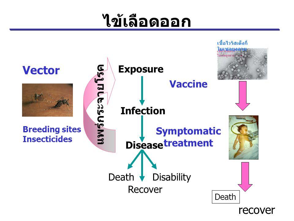 ไข้เลือดออก Vector แพร่กระจายโรค Breeding sites Insecticides Death recover Exposure Infection Disease DeathDisability Recover Vaccine Symptomatic trea