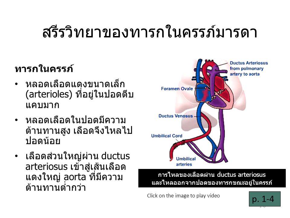 1-6 สรีรวิทยาของทารกในครรภ์มารดา ทารกในครรภ์ หลอดเลือดแดงขนาดเล็ก (arterioles) ที่อยู่ในปอดตีบ แคบมาก หลอดเลือดในปอดมีความ ต้านทานสูง เลือดจึงไหลไป ปอดน้อย เลือดส่วนใหญ่ผ่าน ductus arteriosus เข้าสู่เส้นเลือด แดงใหญ่ aorta ที่มีความ ต้านทานต่ำกว่า p.