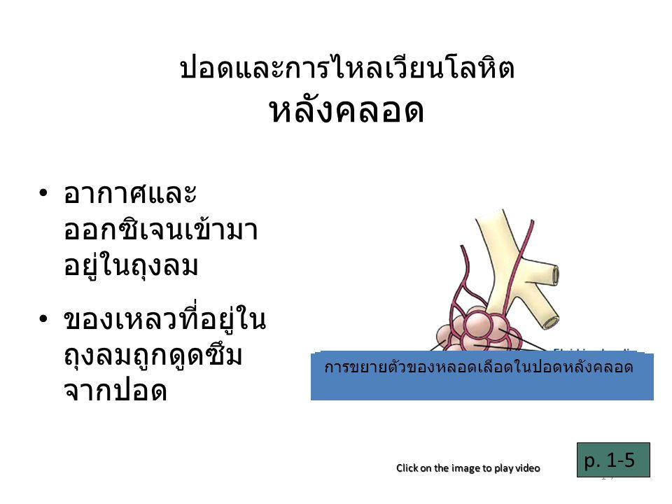 1-8 หลอดเลือดในปอด ขยายตัว เลือดไหลไปสู่ปอด เพิ่มขึ้น p.
