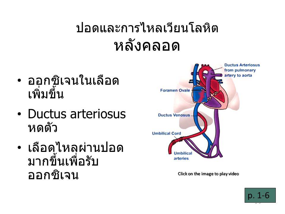 1-9 ปอดและการไหลเวียนโลหิต หลังคลอด ออกซิเจนในเลือด เพิ่มขึ้น Ductus arteriosus หดตัว เลือดไหลผ่านปอด มากขึ้นเพื่อรับ ออกซิเจน Click on the image to play video p.