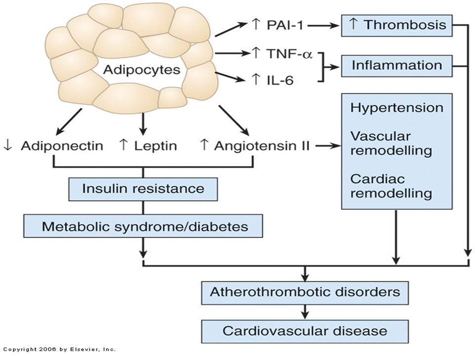 Dyslipidemia Obesity Dysfibrinolysis Hyperglycemia Endothelial Dysfunction Macrovascular Disease Glucose Intolerance Adapted from McFarlane SI, et al.