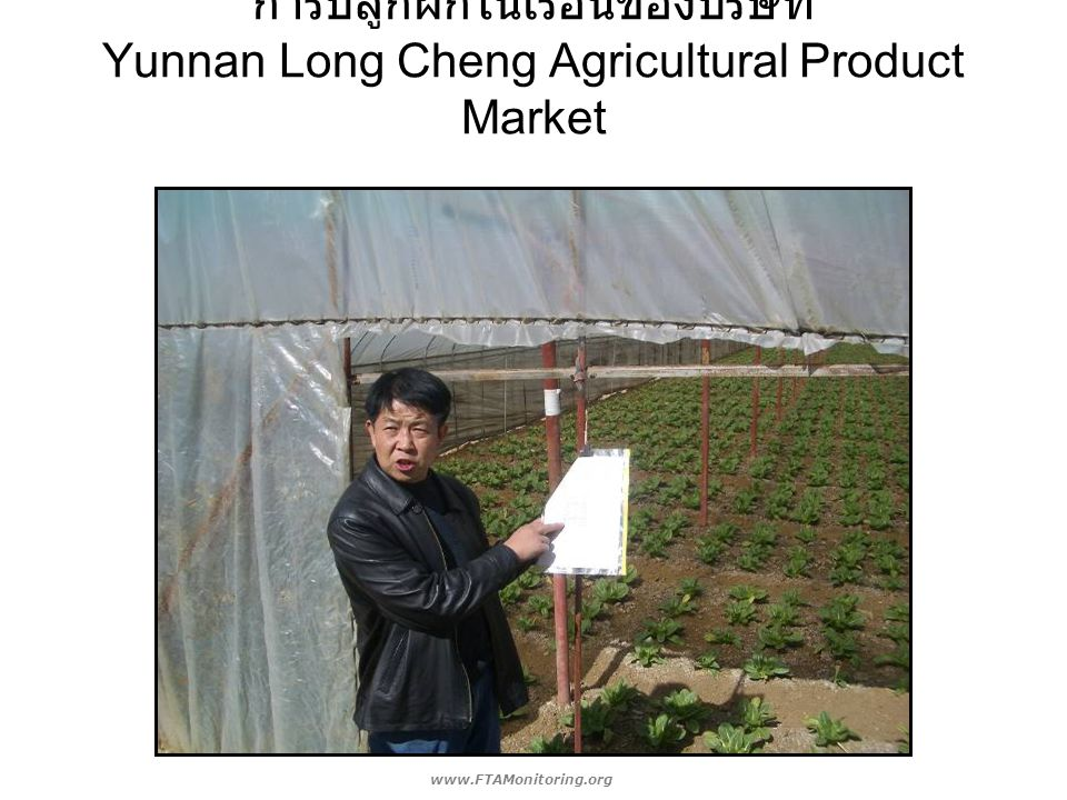 การปลูกผักในเรือนของบริษัท Yunnan Long Cheng Agricultural Product Market www.FTAMonitoring.org