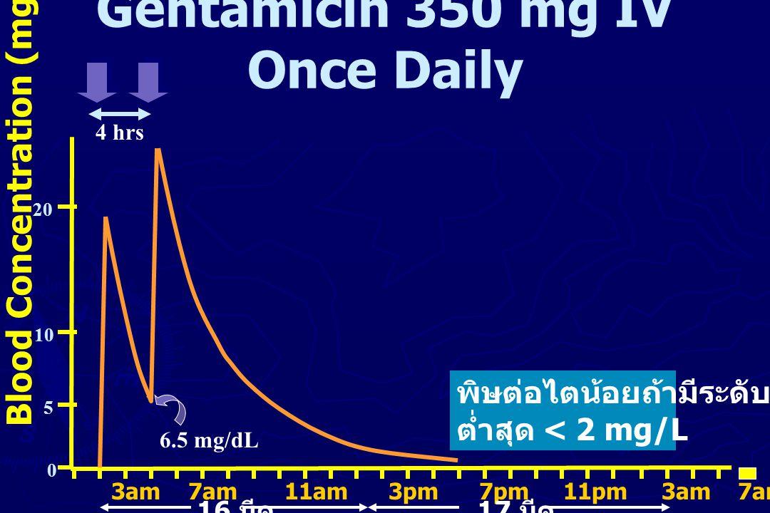 Gentamicin 350 mg IV Once Daily Blood Concentration (mg/L) 10 hrs 20 10 5 0 ซึ่งต้องรอเวลาอย่างน้อย 10 ชั่วโมง หลังเริ่มหยดยา STAT ( ห้ามให้ยา dose ที่ 2 ภายใน 10 ชั่วโมง หลังเริ่มหยดยาครั้งแรกตอน ตี 3) 3am 7am 11am 3pm 7pm 11pm 3am 7am 11am 3pm 7pm 11pm 3pm 16 มีค 17 มีค 2 mg/dL