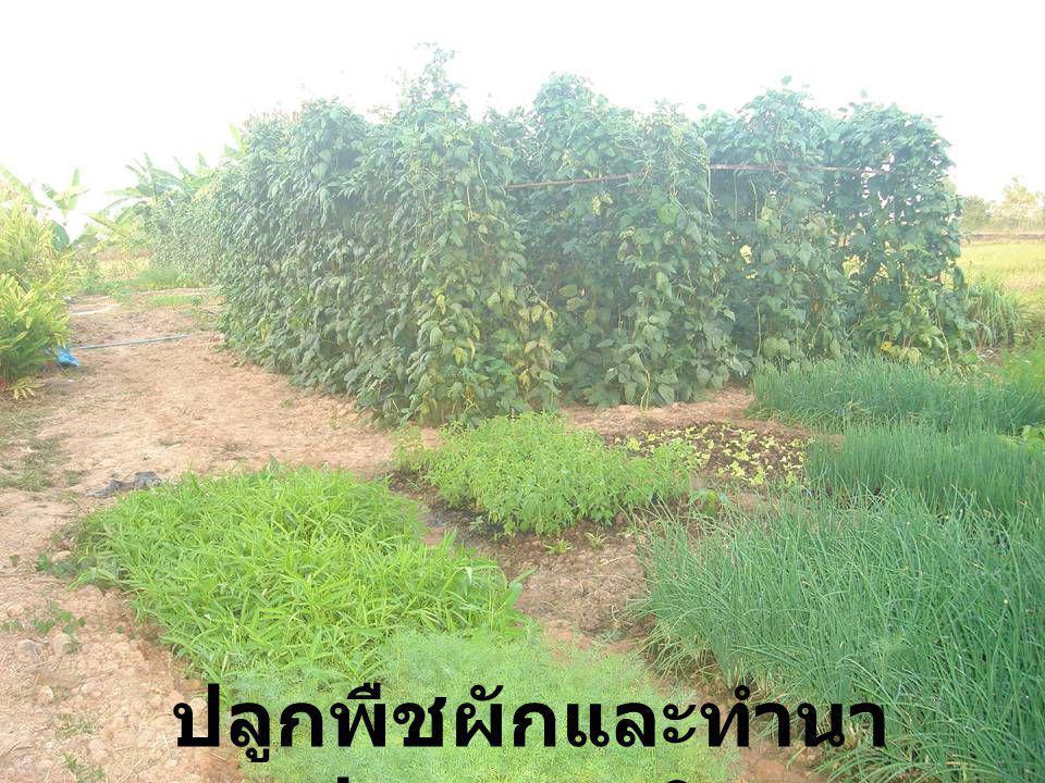 ปลูกพืชผักและทำนา ปลอดสารพิษ