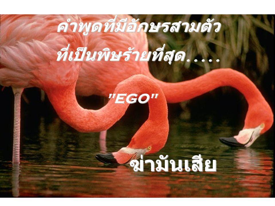 คำพูดที่มีอักษรสามตัว ที่เป็นพิษร้ายที่สุด..... EGO ฆ่ามันเสีย