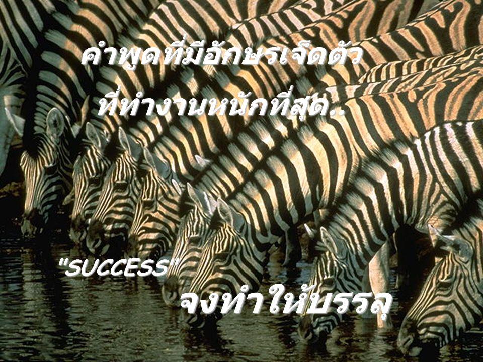 คำพูดที่มีอักษรเจ็ดตัว ที่ทำงานหนักที่สุด.. SUCCESS จงทำให้บรรลุ
