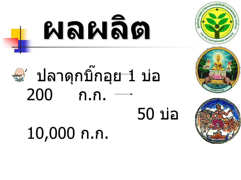 ผลผลิต ผลผลิต ปลาดุกบิ๊กอุย 1 บ่อ 200 ก. ก. 50 บ่อ 10,000 ก. ก.