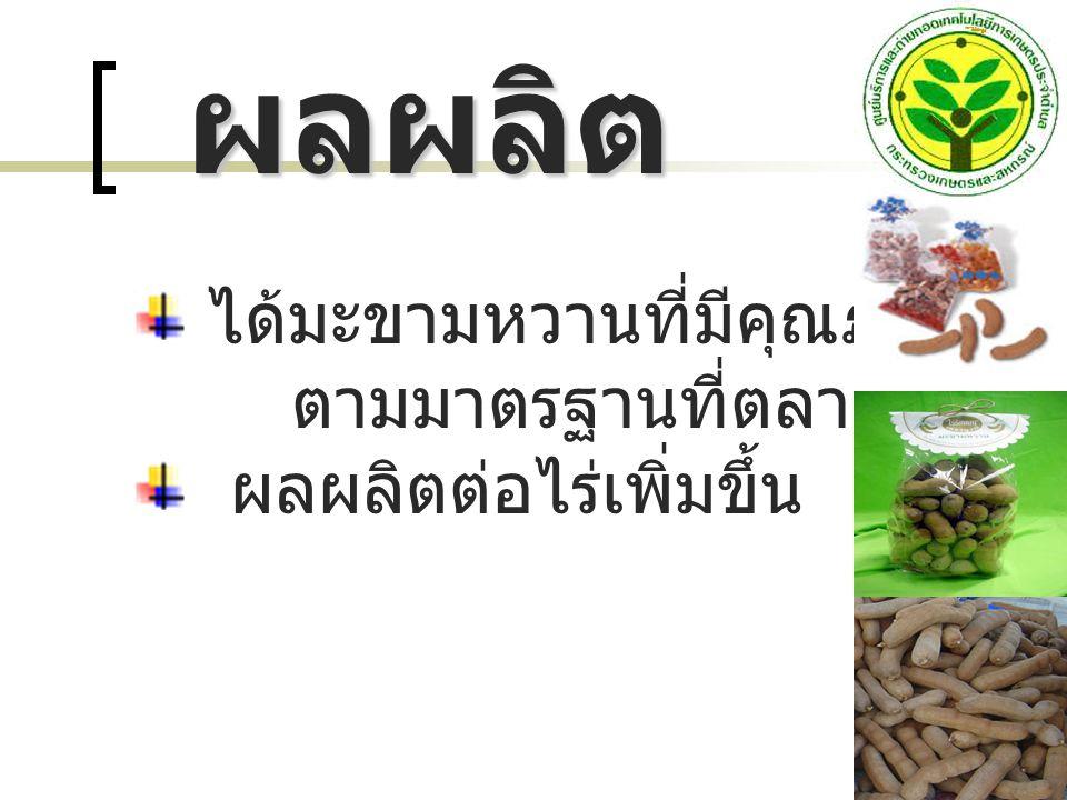 ได้มะขามหวานที่มีคุณภาพ ตามมาตรฐานที่ตลาดต้องการ ผลผลิตต่อไร่เพิ่มขึ้น ผลผลิต ผลผลิต