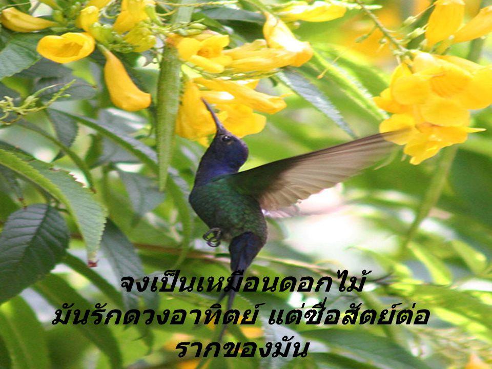 จงเป็นเหมือนนก กิน ร้องเพลง ดื่ม และบิน