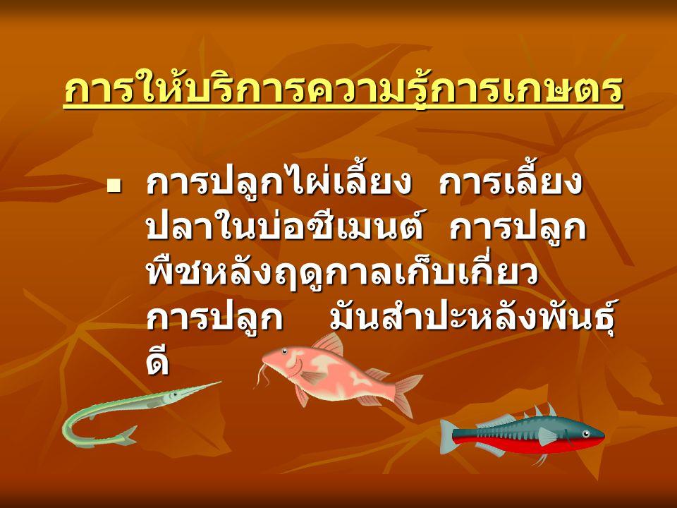 การให้บริการความรู้การเกษตรการให้บริการความรู้การเกษตร การปลูกไผ่เลี้ยง การเลี้ยง ปลาในบ่อซีเมนต์ การปลูก พืชหลังฤดูกาลเก็บเกี่ยว การปลูก มันสำปะหลังพ