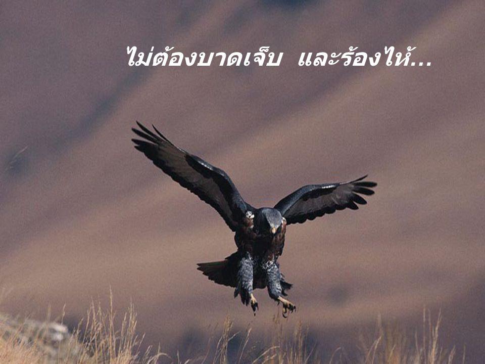 ไม่ต้องหวาดกลัว …