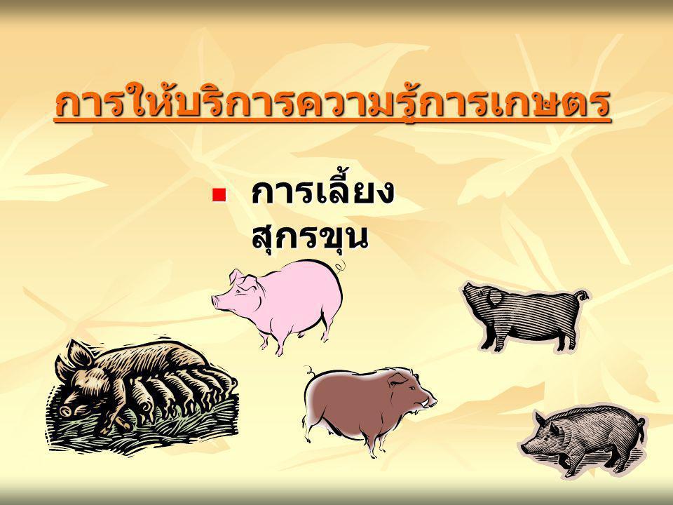 การให้บริการความรู้การเกษตรการให้บริการความรู้การเกษตร การเลี้ยง สุกรขุน การเลี้ยง สุกรขุน