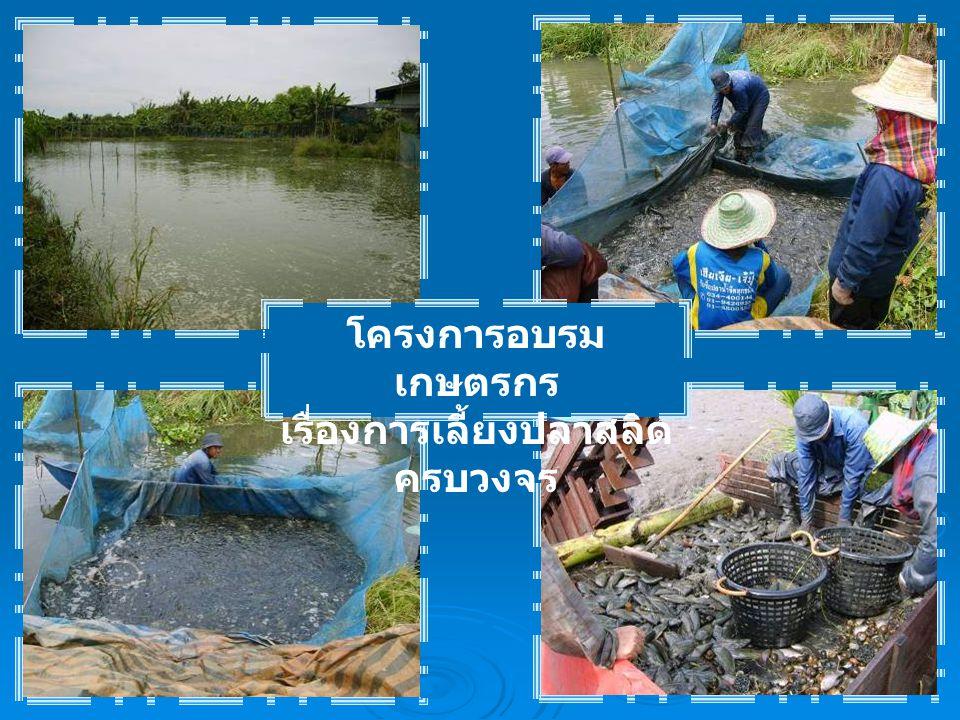 โครงการอบรม เกษตรกร เรื่องการเลี้ยงปลาสลิด ครบวงจร