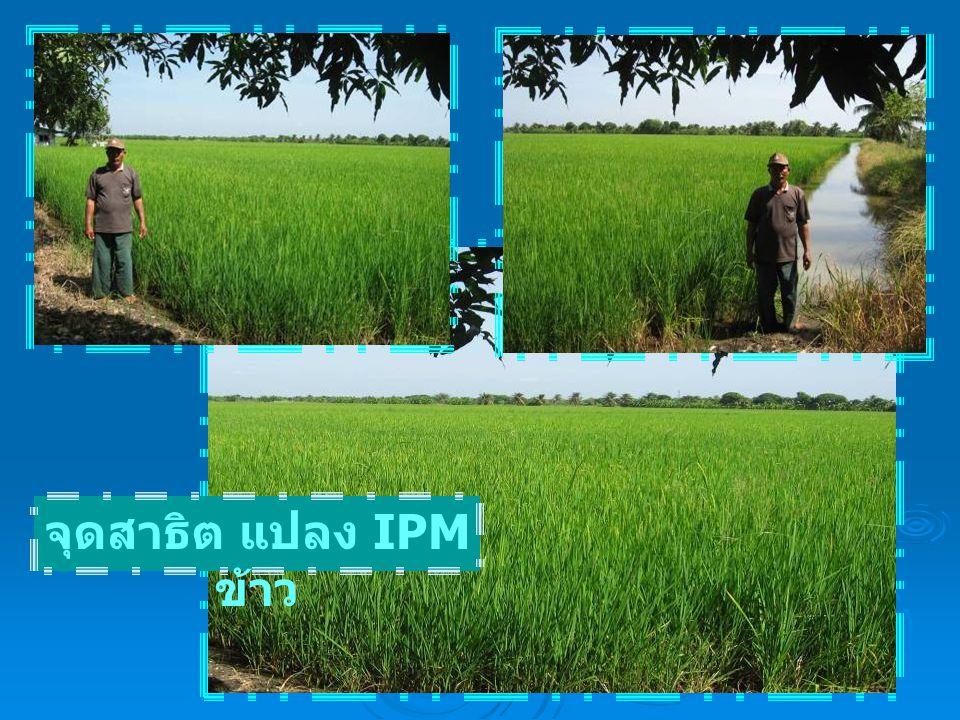 จุดสาธิต แปลง IPM ข้าว
