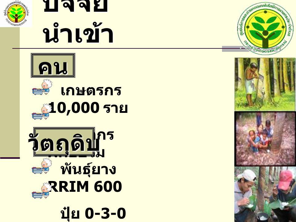 ปัจจัย นำเข้า คน เกษตรกร 10,000 ราย วิทยากร ฝึกอบรม พันธุ์ยาง RRIM 600 ปุ๋ย 0-3-0 วัตถุดิบ