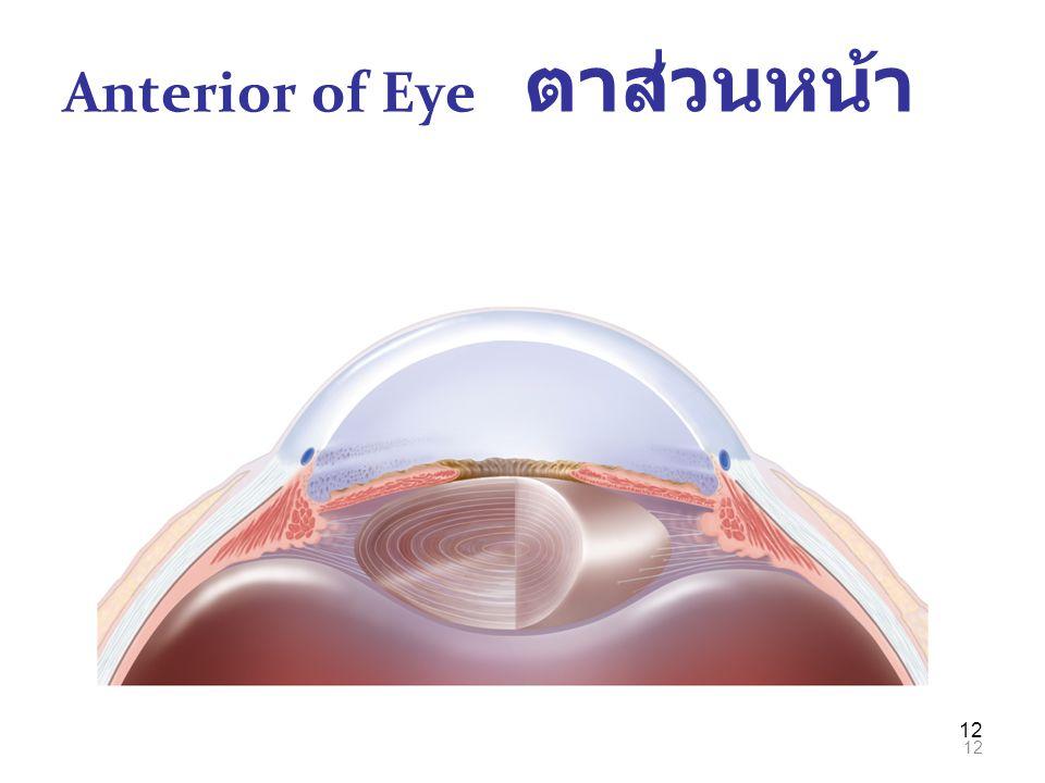 12 Anterior of Eye ตาส่วนหน้า