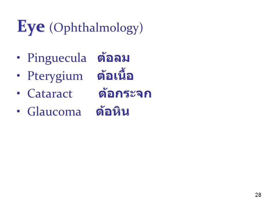 28 Eye Eye (Ophthalmology) Pinguecula ต้อลม Pterygium ต้อเนื้อ Cataract ต้อกระจก Glaucoma ต้อหิน