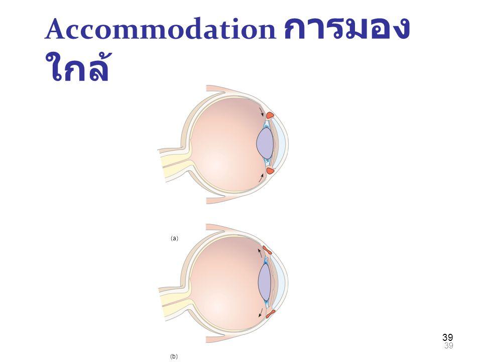 39 Accommodation การมอง ใกล้ (a) (b)