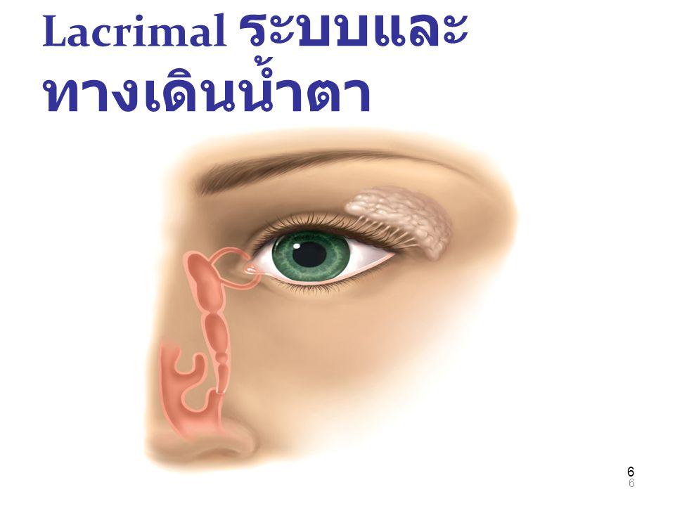 6 Lacrimal ระบบและ ทางเดินน้ำตา 6