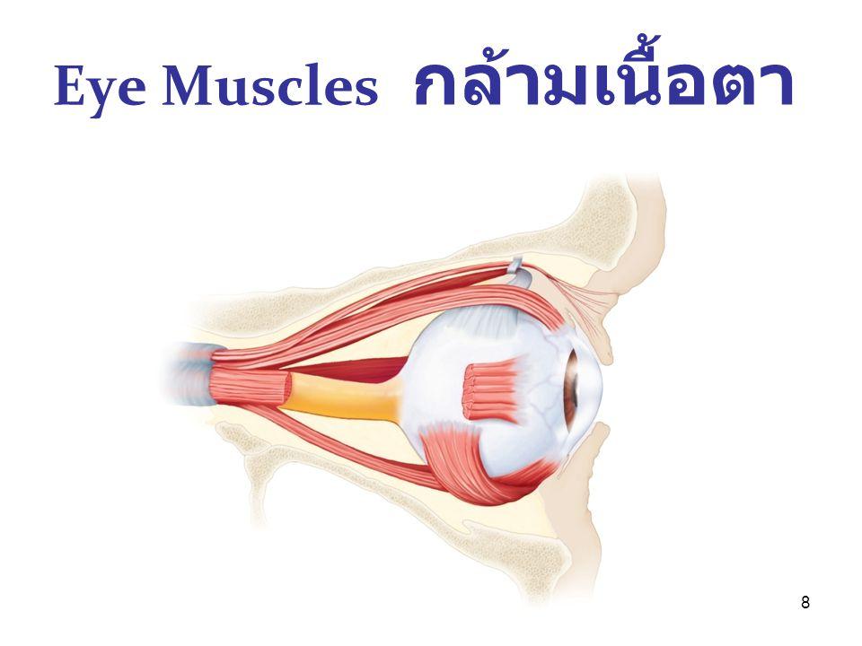 19 Eye examination Visual acuity ( สายตา ) o 6/6-1,6/9 ; 20/20,20/30-1 Ocular tension o Applanation ( สัมผัส ),Pneumotension ( เป่า ลม ) o 14,12 (<21 mmHg )