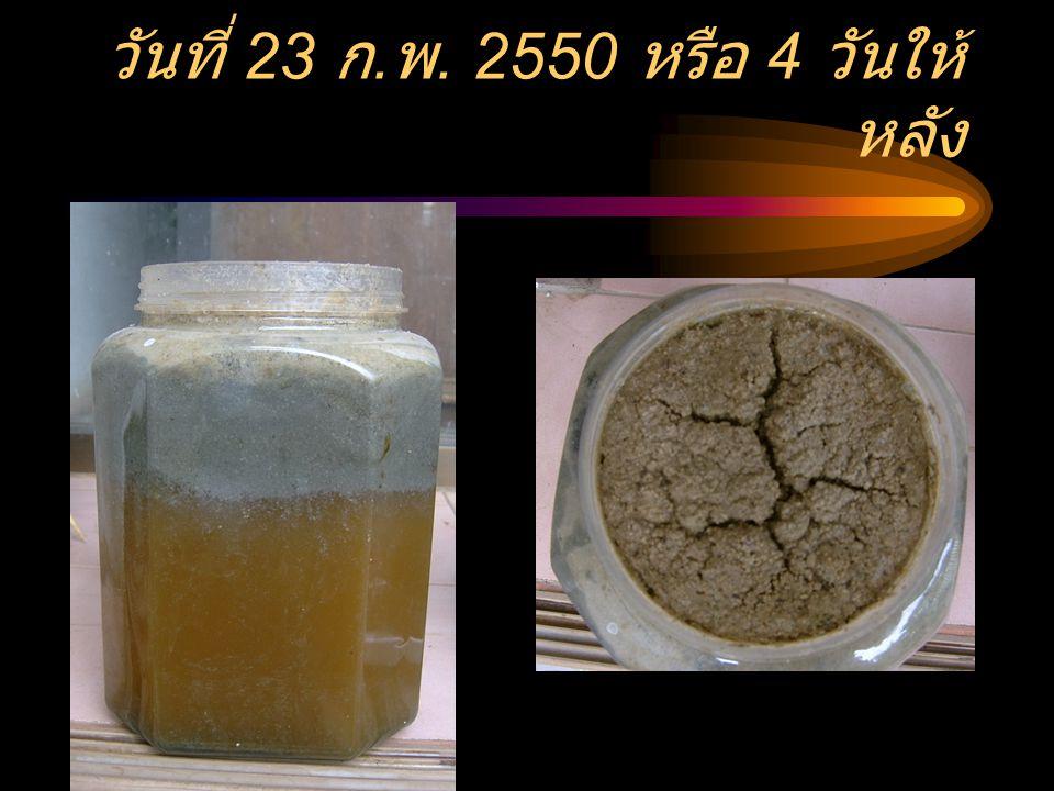 สภาพน้ำทิ้งไขมันกับแป้ง เมื่อใส่น้ำ ชีวภาพลงไป ณ วันที่ 19 ก. พ. 2550 เวลา 20 นาฬิกา