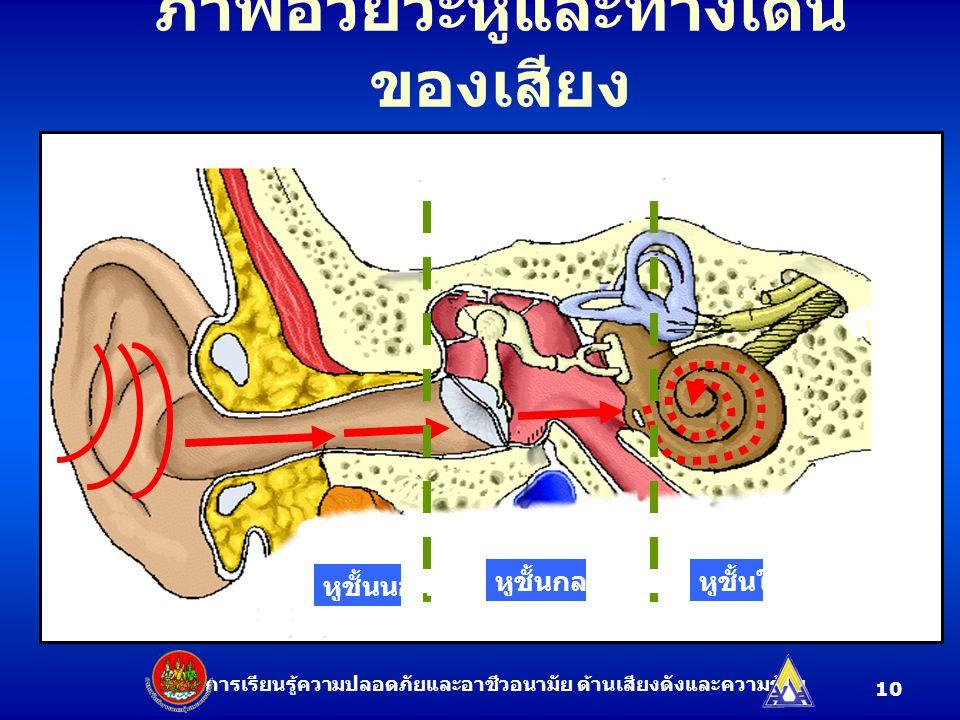 ภาพอวัยวะหูและทางเดิน ของเสียง ชุดการเรียนรู้ความปลอดภัยและอาชีวอนามัย ด้านเสียงดังและความร้อน หูชั้นนอก หูชั้นกลางหูชั้นใน 10