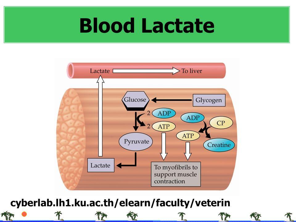 Blood Lactate cyberlab.lh1.ku.ac.th/elearn/faculty/veterin