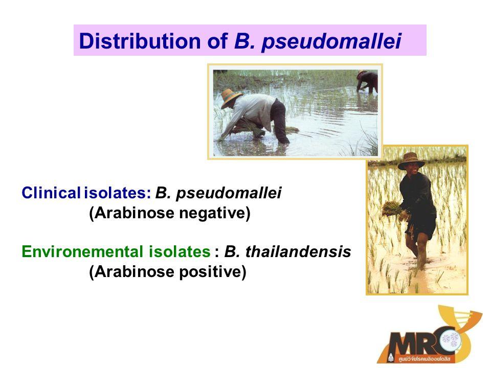 ศูนย์วิจัยโรคเมลิออยโดสิส โครงการให้บริการและฝึกอบรมตรวจแยกวิเคราะห์ เชื้อ Burkholderia pseudomallei ด้วยวิธี latex agglutination test Exported to CDC, USA, Australia, Hong Kong and UAE