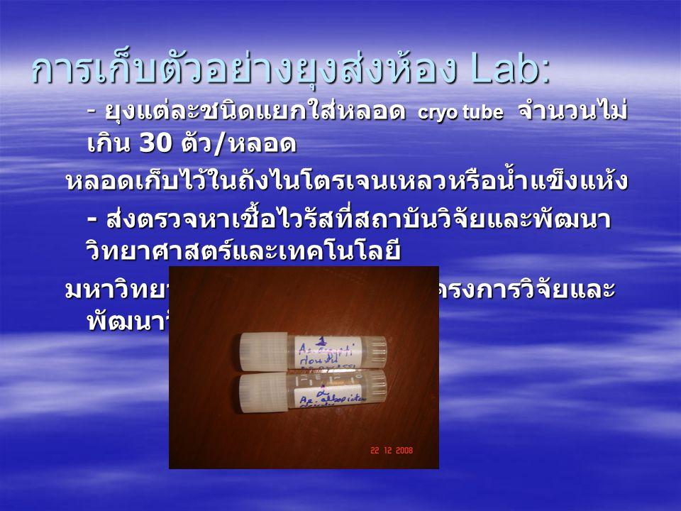 การเก็บตัวอย่างยุงส่งห้อง Lab: - ยุงแต่ละชนิดแยกใส่หลอด cryo tube จำนวนไม่ เกิน 30 ตัว / หลอด หลอดเก็บไว้ในถังไนโตรเจนเหลวหรือน้ำแข็งแห้ง - ส่งตรวจหาเ