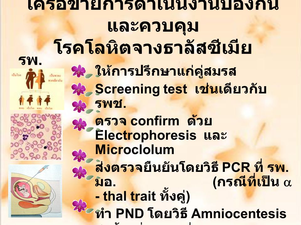 Clinical Guideline for Thalassemia Prevention and Control First ANC ตรวจ OF, DCIP/ Hct, MCV นัดสามีและภรรยา ฟังผล เลือดพร้อมกัน เจาะเลือดสามี ตรวจ OF, DCIP/ Hct, MCV ANC ตามปกติ -ve +ve -ve ส่งตรวจยืนยัน Hb typing +ve Counseling คู่เสี่ยง (  -thal ส่งตรวจ PCR ที่ รพ.