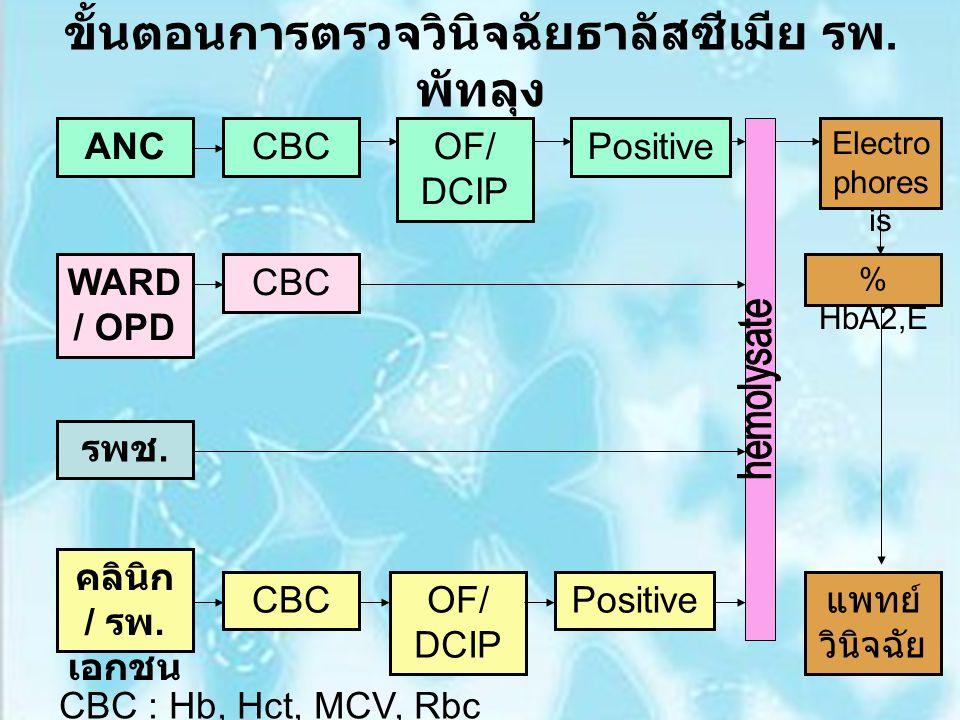 ขั้นตอนการตรวจวินิจฉัยธาลัสซีเมีย รพ. พัทลุง ANCCBCOF/ DCIP Positive Electro phores is WARD / OPD CBC รพช. คลินิก / รพ. เอกชน CBC % HbA2,E แพทย์ วินิจ