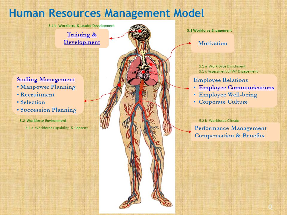 Staffing Management Manpower Planning Recruitment Selection Succession Planning Human Resources Management Model Employee Relations Employee Communications Employee Well-being Corporate Culture Training & Development Performance Management Compensation & Benefits Motivation Q 5.1 b Workforce & Leader Development 5.2 a Workforce Capability & Capacity 5.2 Workforce Environment 5.1 Workforce Engagement 5.1 c Assessment of WF Engagement 5.1 a Workforce Enrichment 5.2 b Workforce Climate