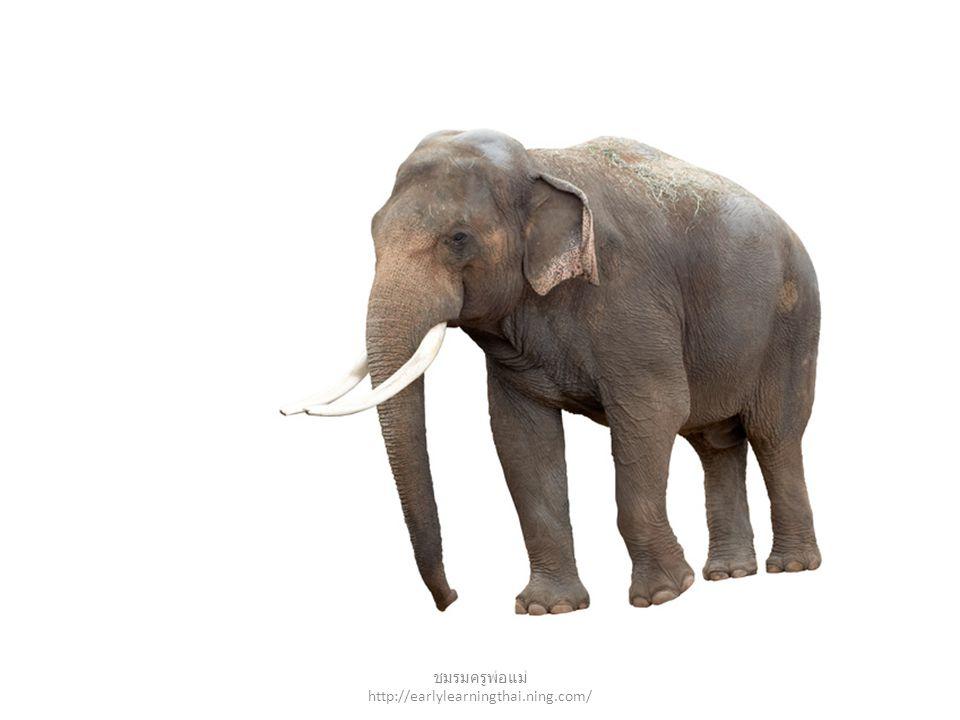 elephant ชมรมครูพ่อแม่ http://earlylearningthai.ning.com/