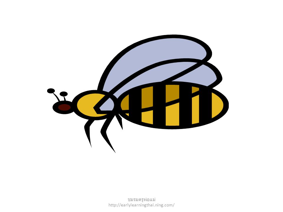 insect ชมรมครูพ่อแม่ http://earlylearningthai.ning.com/