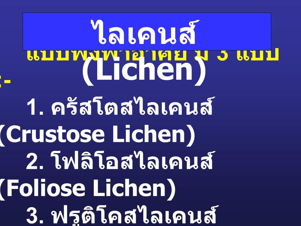 รา + สาหร่าย : แบบพึ่งพาอาศัย มี 3 แบบ :- 1. ครัสโตสไลเคนส์ (Crustose Lichen) 2. โฟลิโอสไลเคนส์ (Foliose Lichen) 3. ฟรูติโคสไลเคนส์ (Fruticose Lichen)
