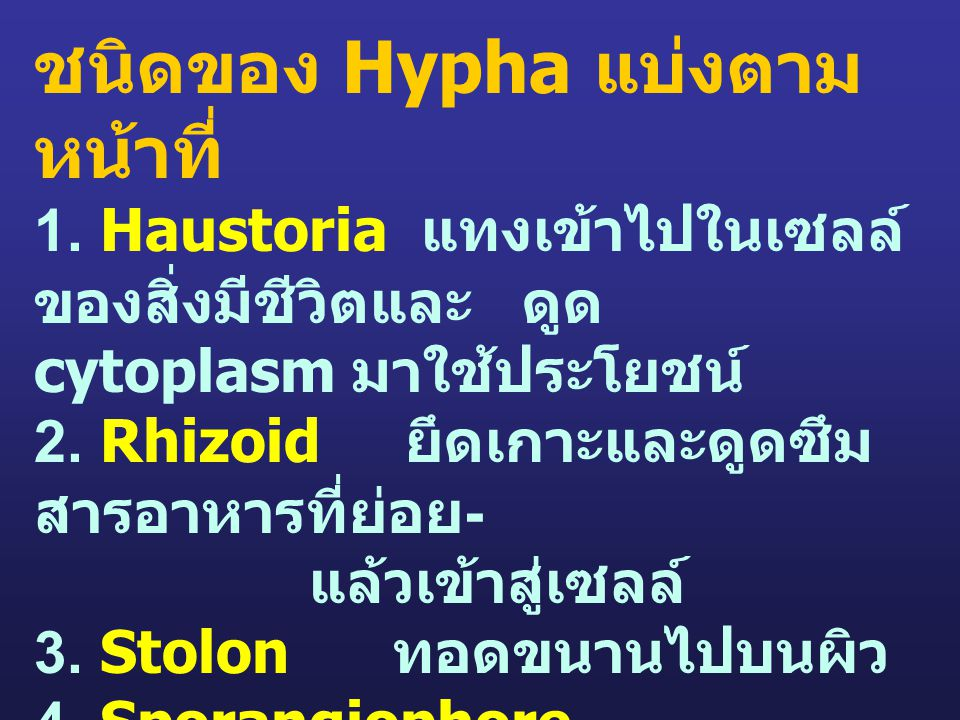 ชนิดของ Hypha แบ่งตาม หน้าที่ 1. Haustoria แทงเข้าไปในเซลล์ ของสิ่งมีชีวิตและ ดูด cytoplasm มาใช้ประโยชน์ 2. Rhizoid ยึดเกาะและดูดซึม สารอาหารที่ย่อย
