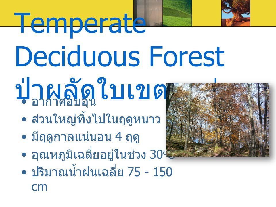 Temperate Deciduous Forest ป่าผลัดใบเขตอบอุ่น อากาศอบอุ่น ส่วนใหญ่ทิ้งไปในฤดูหนาว มีฤดูกาลแน่นอน 4 ฤดู อุณหภูมิเฉลี่ยอยู่ในช่วง 30 o C ปริมาณน้ำฝนเฉลี